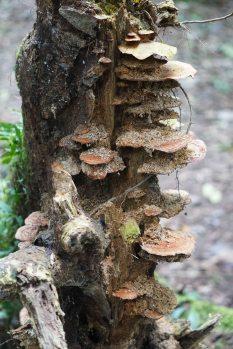 72 mushrooms sm