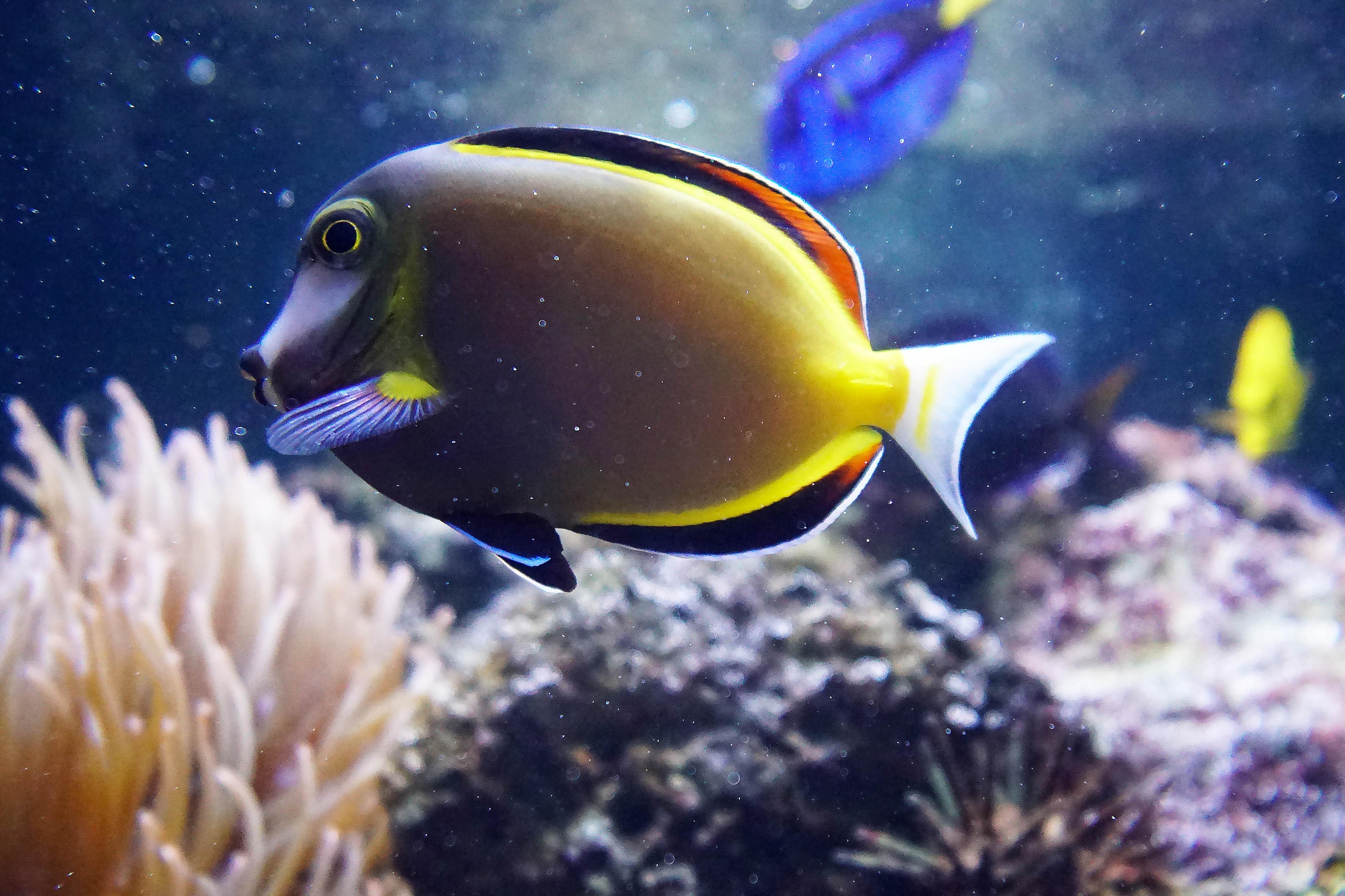 10 fishy sm
