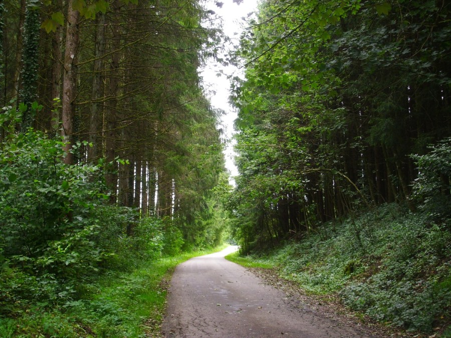 Stradina nella Foresta Nera