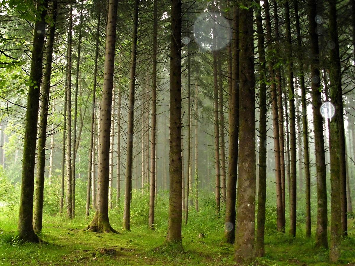 Tempesta nella Foresta Nera
