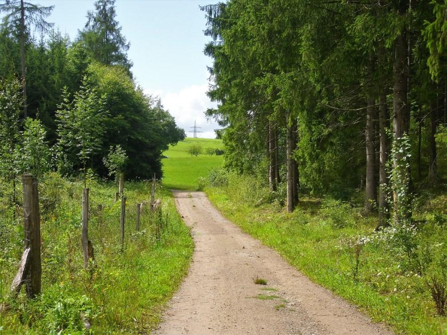 Strade nei campi della Foresta Nera
