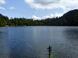 Il lago Feldsee, incastonato nella foresta