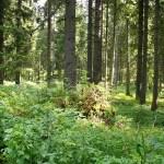 Titisee-Feldsee-Schluchsee - Foresta-Feldberg.jpg