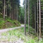 strada in mezzo alla foresta vicino al Titisee