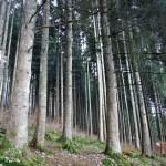 Titisee-Feldsee-Schluchsee - Titisee-fitta-foresta.jpg