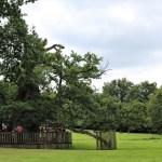 Foresta-di-Paimpont - Foresta-di-Paimpont-quercia-gigliottina.jpg