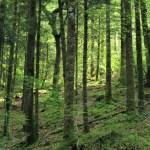 Huelgoat - Huelgoat-foresta-2.jpg
