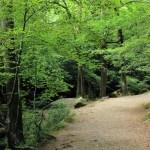 Huelgoat - Huelgoat-sentiero-nei-boschi.jpg