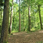 Huelgoat - Huelgoat-sentiero-nel-bosco.jpg