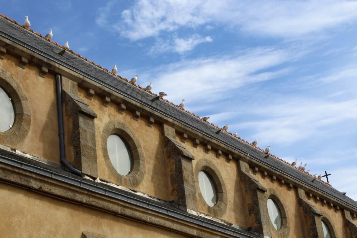 Ile-de-Sein - Ile-de-Sein-gabbiani-sul-tetto-della-chiesa.jpg