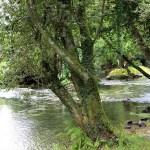 Pont-Aven - pont-aven-bois-damour-alberi-sullaven.jpg
