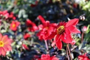 Quimper - Quimper-flowers.jpg