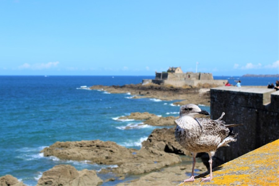 St-Malo - St-Malo-fort-national-6