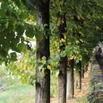 Vercurago - Santuario-San-Girolamo-salita.jpg