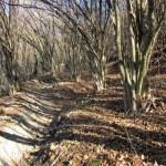 Pizzo-Formico - Pizzo-Formico-sentiero-nel-bosco.jpg