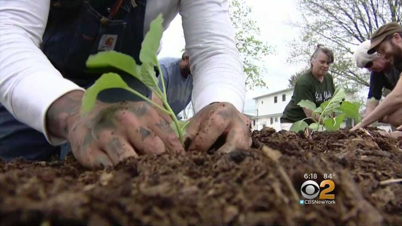 Church, State At Odds Over Lawn Used For Farming