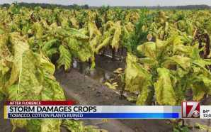Crops across the state destroyed by Florence