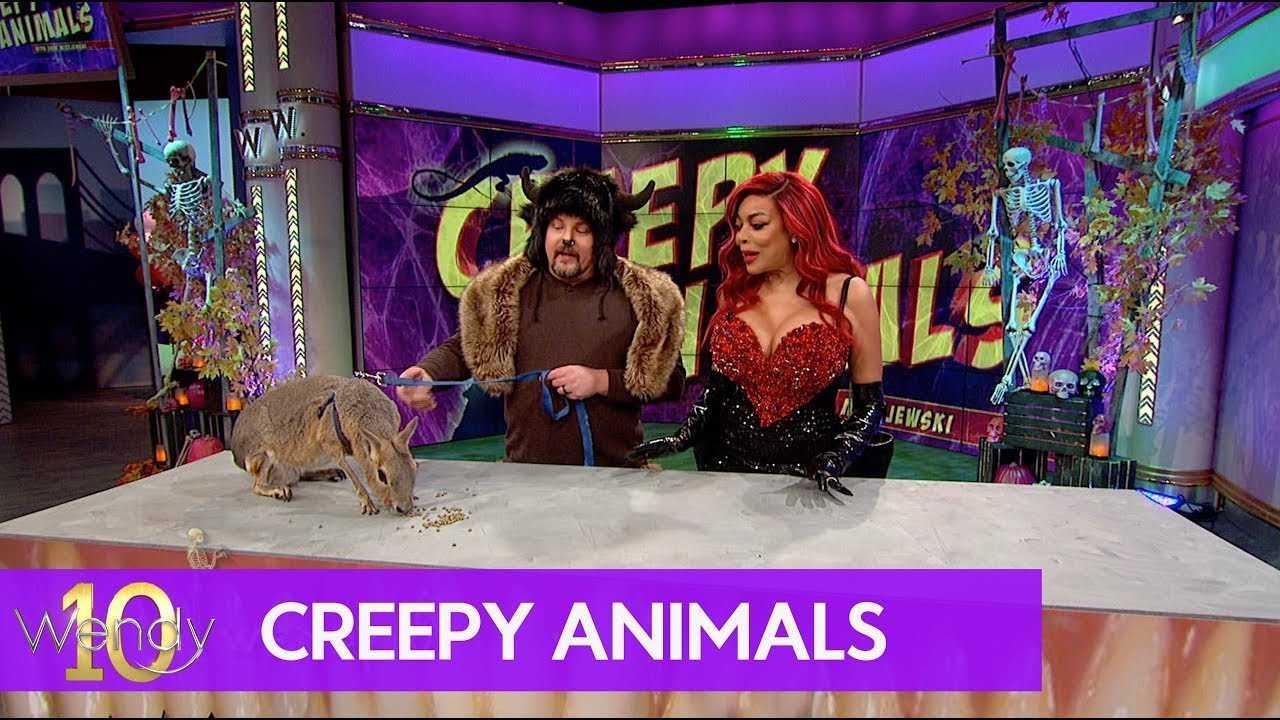Spooky Animals