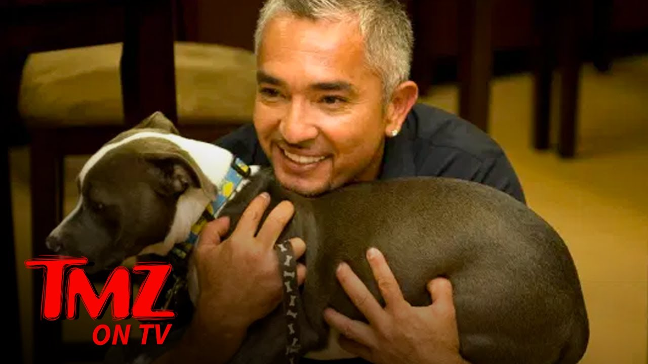 Cesar Millan Says Dogs Will Experience Separation Anxiety When People Go Back To Work   TMZ