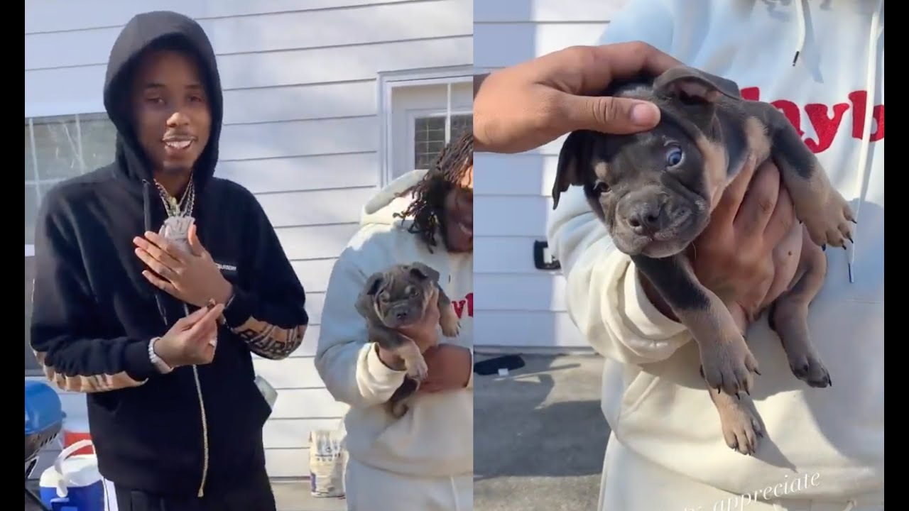 Pooh Shiesty Spends $10K On Rare Exotic Bully Puppy