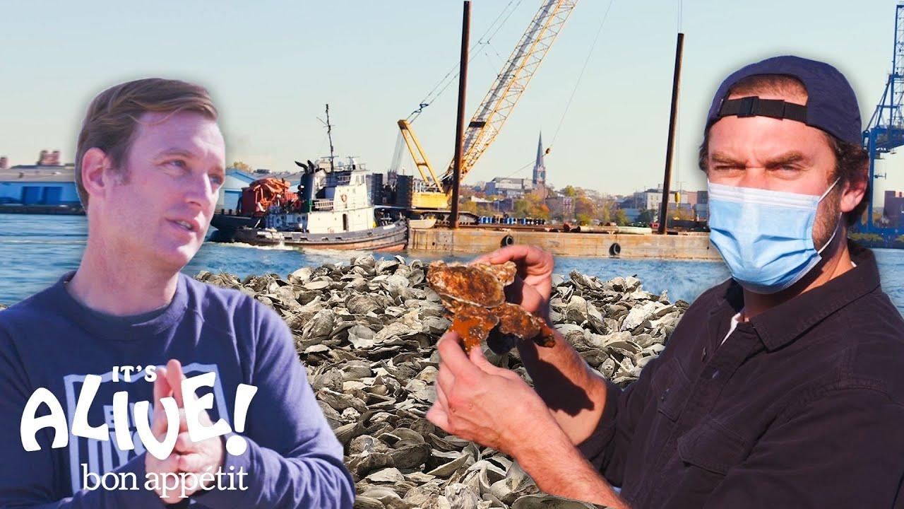 Brad Restores Oyster Reefs | It's Alive | Bon Appétit