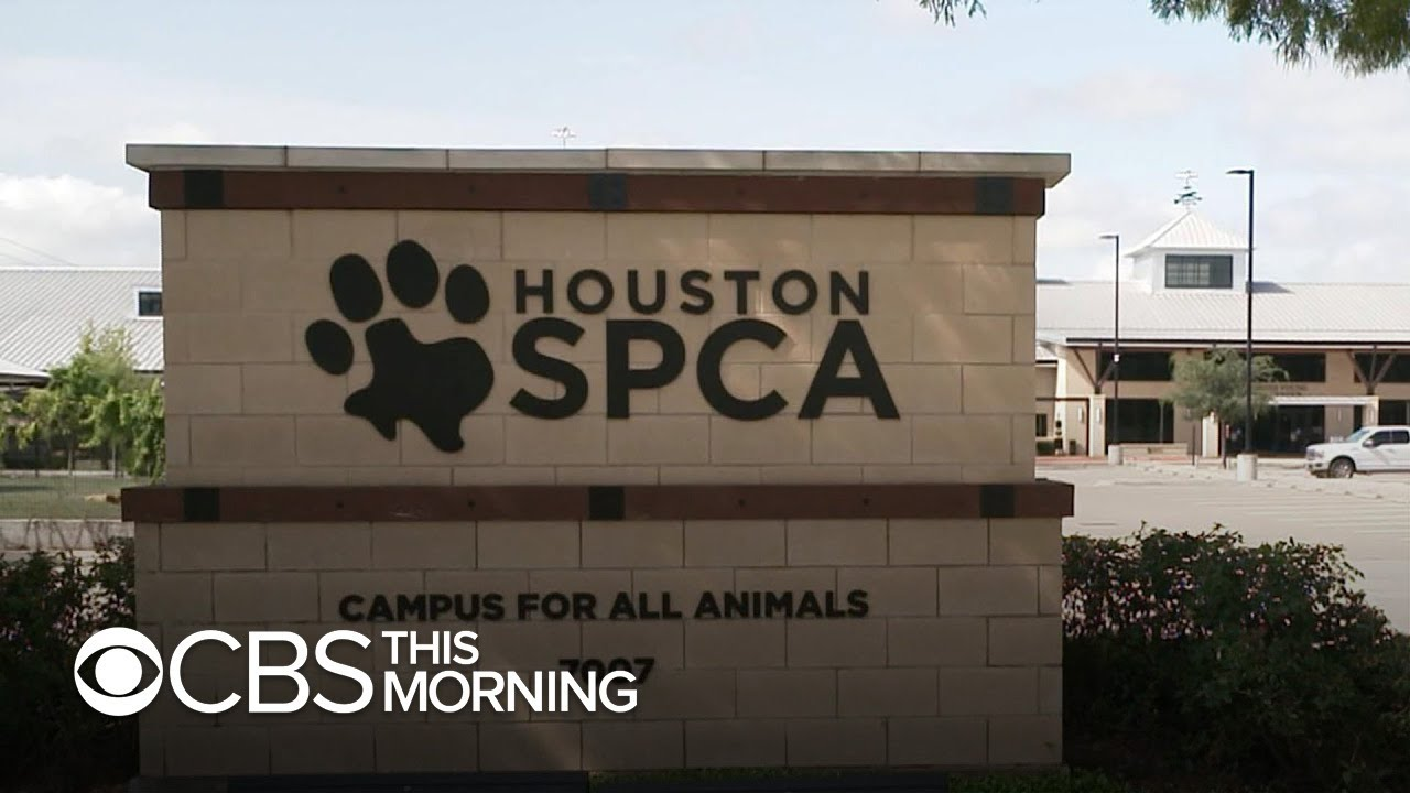 National animal welfare nonprofit ASPCA faces spending criticism