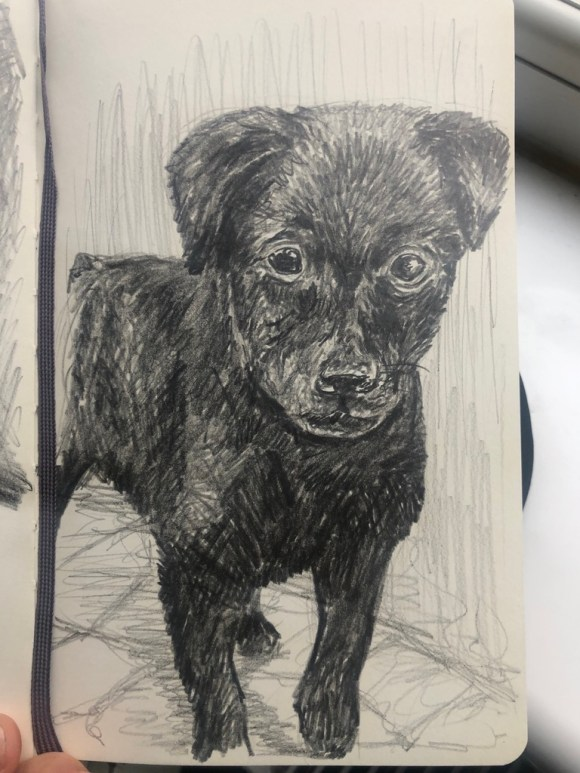 Drawing of a puppy