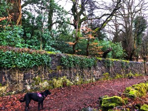 Trail with dog standing next to a large stone wall.