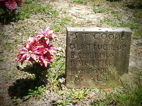 Headstone for a fallen coon hound