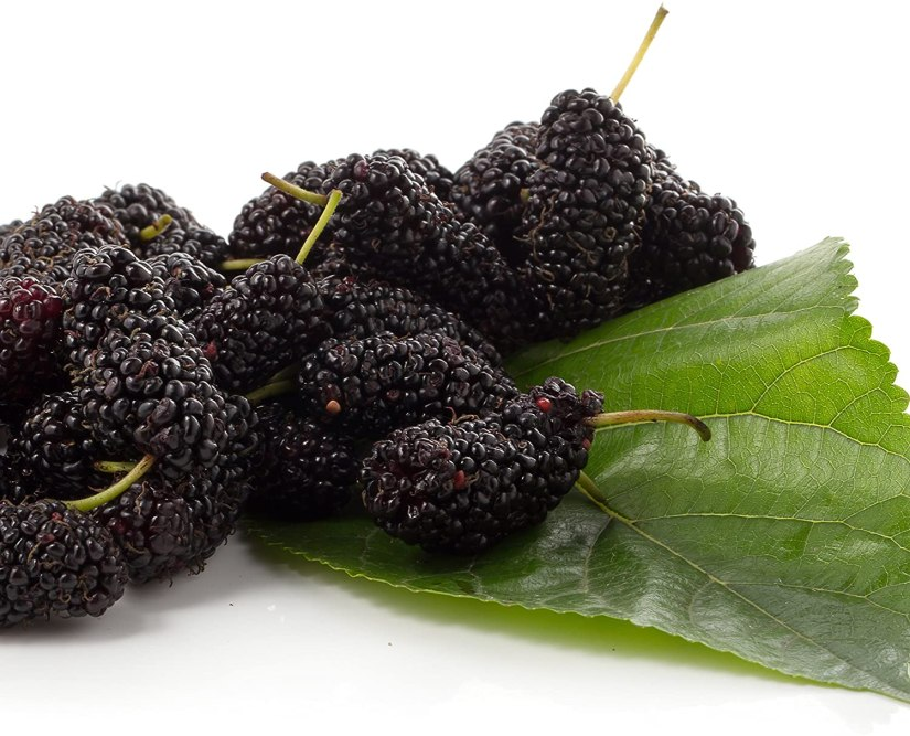 Black mulberry is is a small deciduous tree cultivated worldwide, mainly for its edible fruits. Its leaves, like those of the white mulberry can be used to feed silkworms but the silk is of lesser quality.
