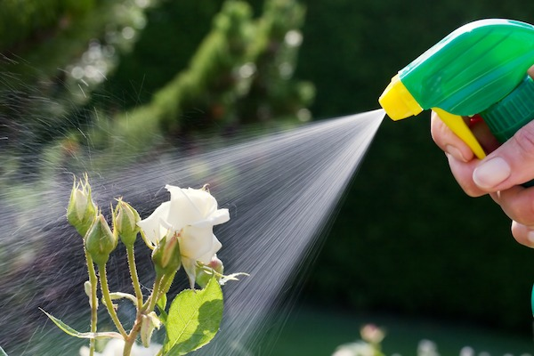 Get out a spray bottle and fill it 1/3 of the way with distilled white vinegar and the rest of the way with water. This will kill the aphids and larvae on contact.