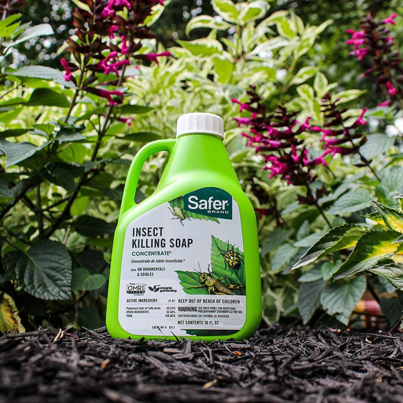 Insecticidal soap is strictly for use on soft-bodied insects. It works well on common pests like aphids, lacebugs, mealybugs, mites, leaf hoppers, scale insects, spider mites, thrips and whiteflies.