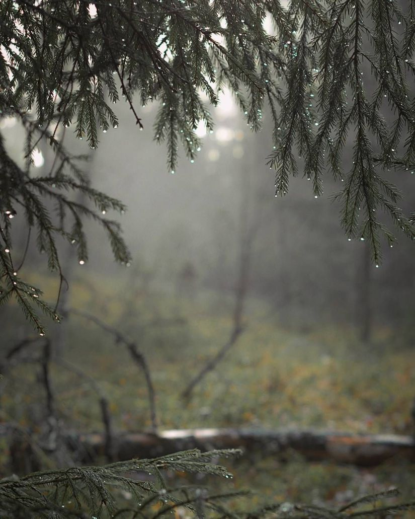 Heavy rain can repel insects from plants and whatever they inhabit.