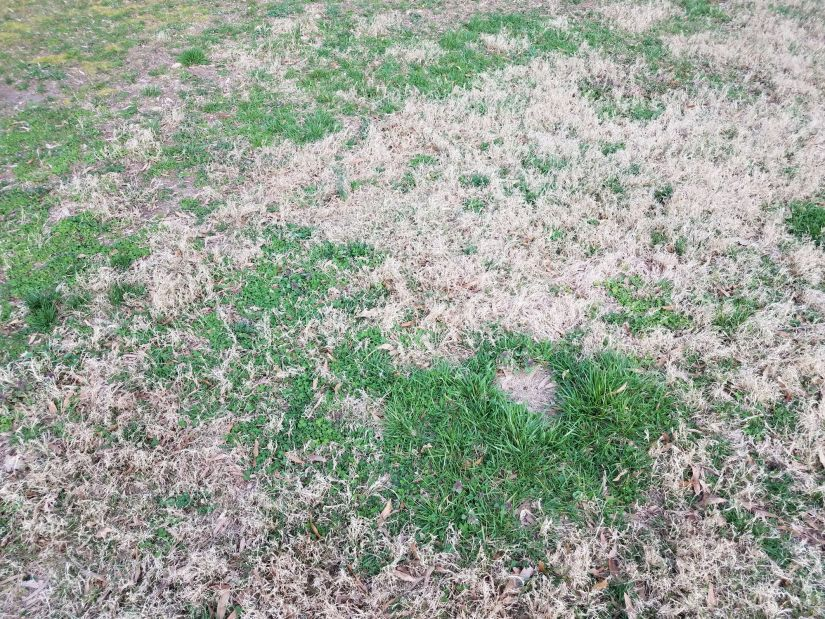 The best way to prevent chinch bugs from returning is to practice proper lawn care. Maintaining a healthy lawn helps your grass bounce back from the damage caused by feeding chinch bugs. Keep an eye out for these pests, keep thatch to a minimum and consider applying preventative control products in early spring.