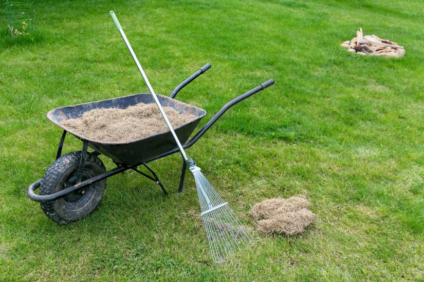 Dethatcher or lawn scarifier is a device that removes thatch from lawns. Types of dethatchers include motorized dethatchers or those that can be pulled behind a garden tractor.