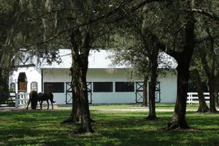 7551-tortoise-way-gator-creek-equestrian-estate-home-barn