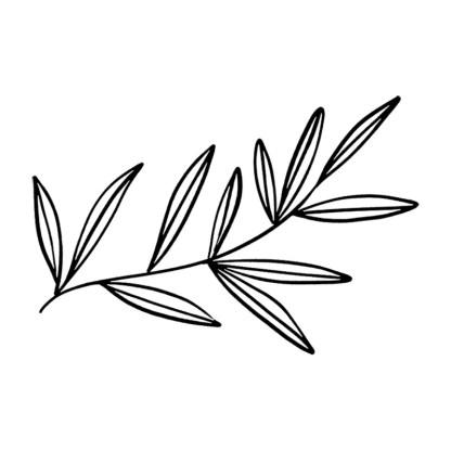 foliage leaves