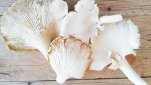 mushroom-2-300