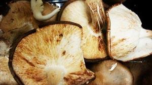 Health Benefits Mushrooms