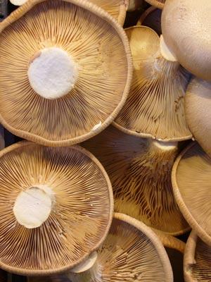mushroom-6-300