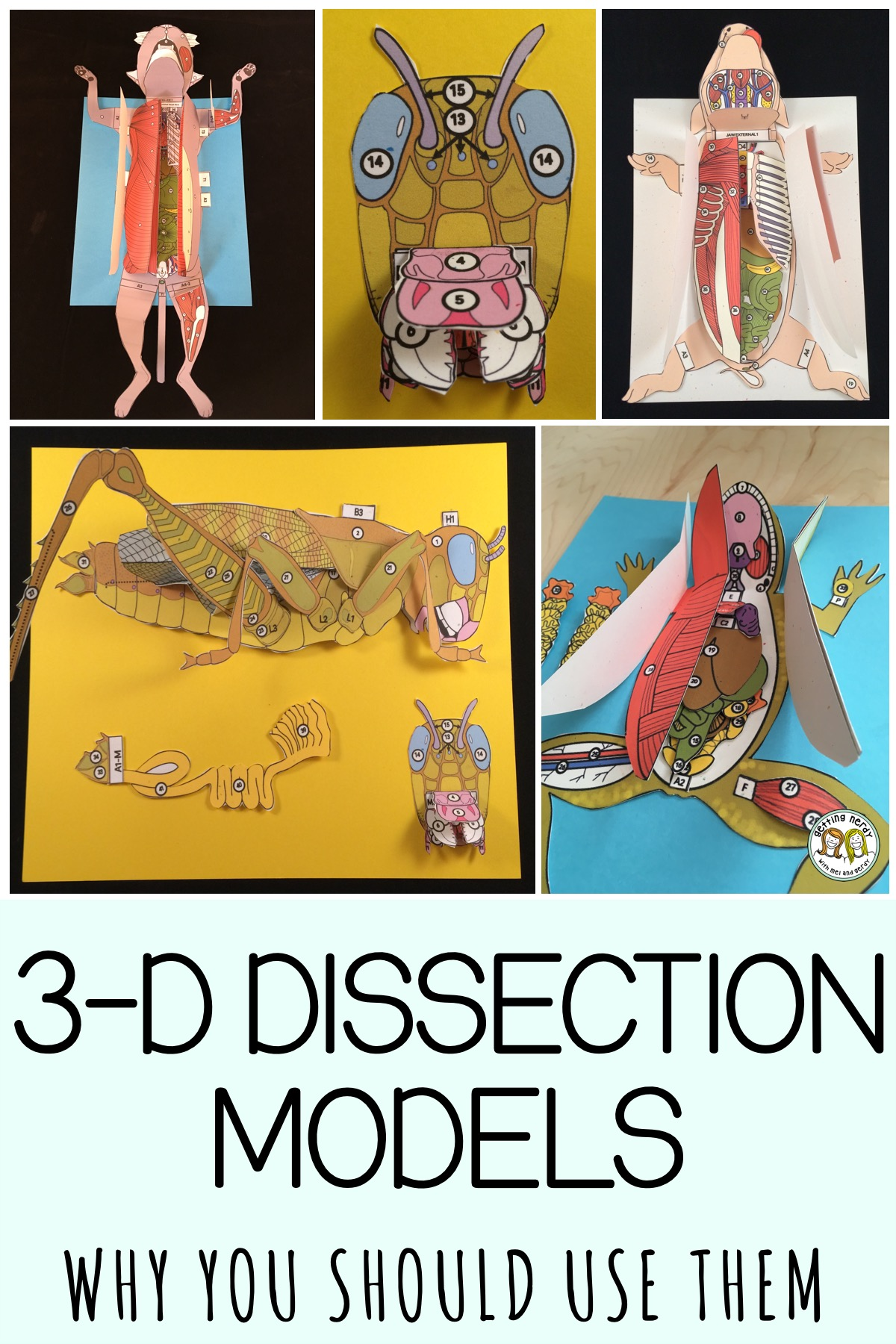 3 D Scienstructable Dissection Paper Models For Life