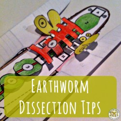 Lesson Plan: Earthworm Dissection