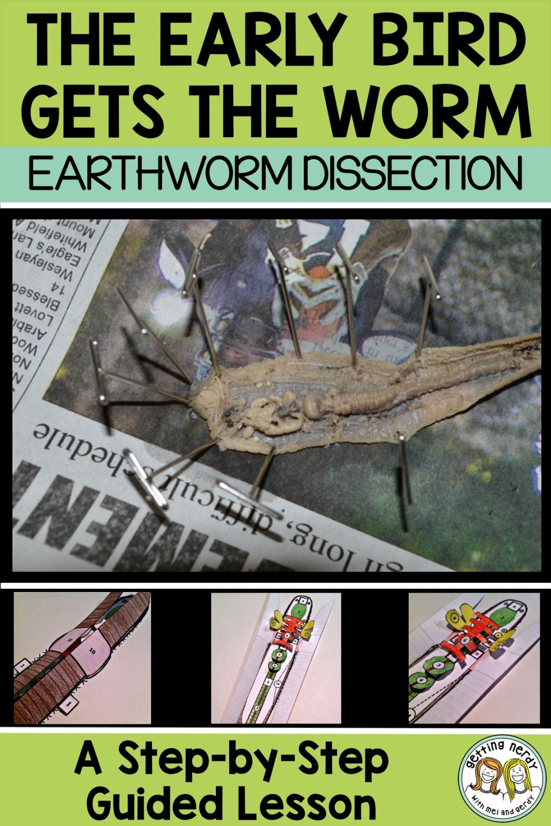 Love these labs tips for a worry free earthworm dissection! - Getting Nerdy Science #gettingnerdyscience #earthwormdissection #dissection
