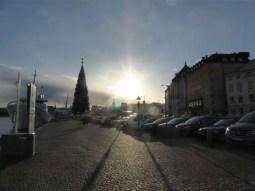 Christmas trees and winter sun