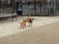Making friends at Tompkins Square Dog Run