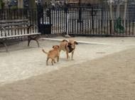 Making friends at Tompkins Square Dog Run