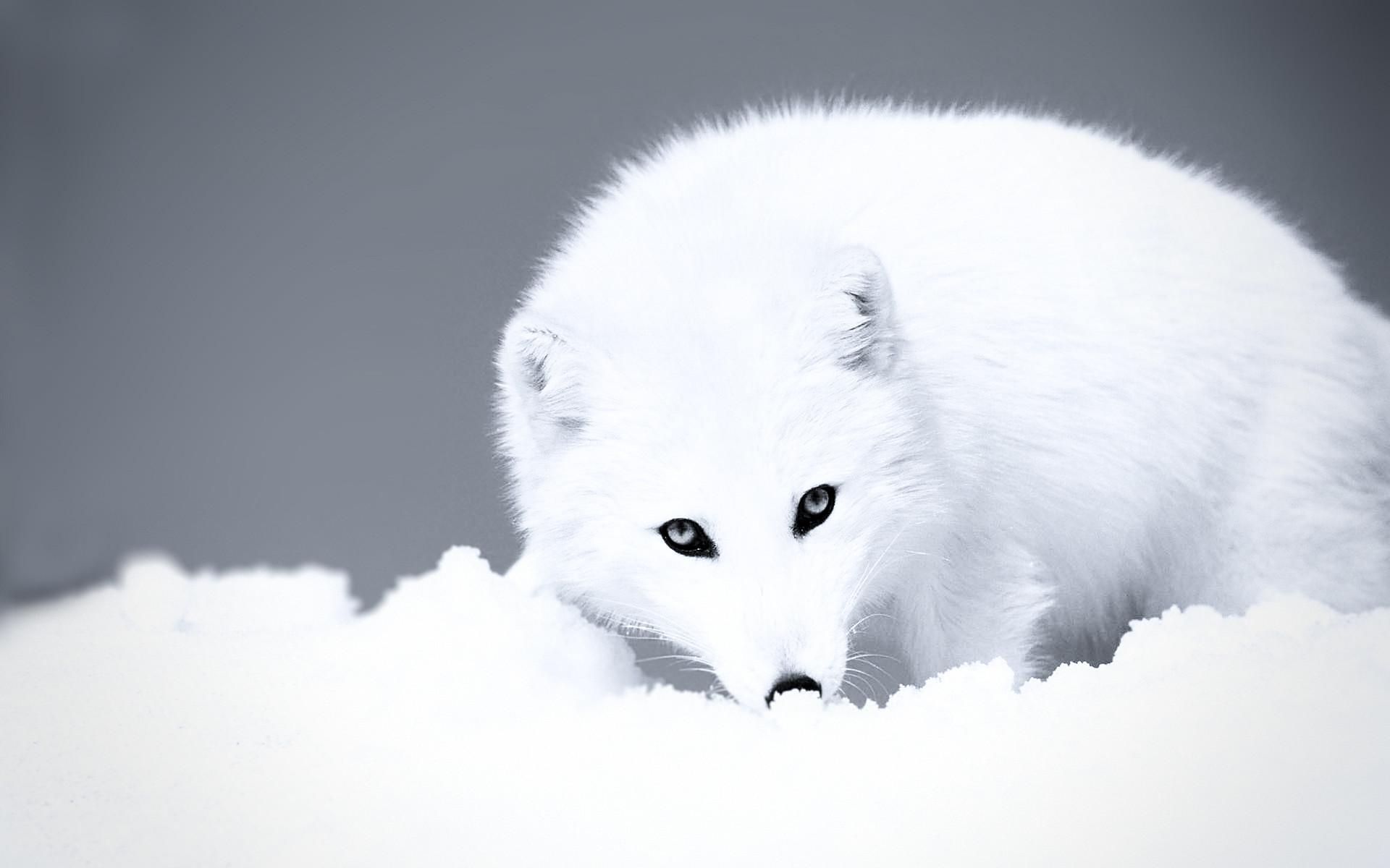 Cute Winter Animal Wallpaper 48 Images