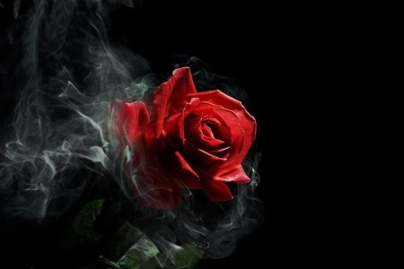 Gothic Roses Wallpaper  63  images  1920x1080 Full HD HD Tablet 10  Tablet 7   Wallpaper Name   Gothic Rose