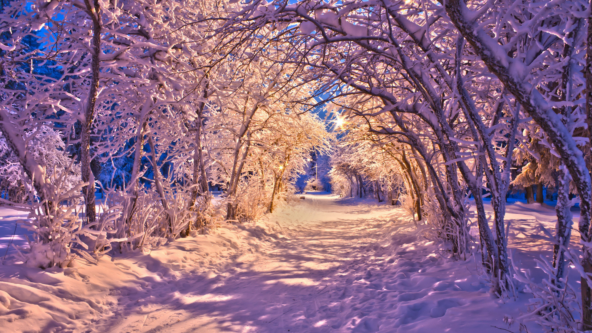 Winter Free Wallpapers Computers Poto Butut