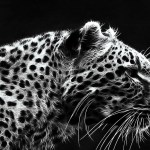 Iphone 7 Wallpaper Black Jaguar